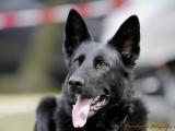 Hund_a