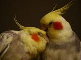 Vogel_Candy_und_Dusty
